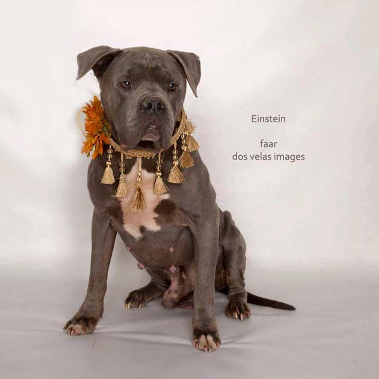 Adopt dog in Riverside, CA