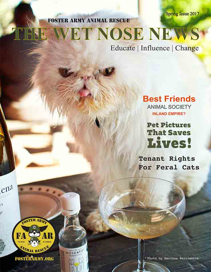 Wet Nose Newsletter Spring 2017