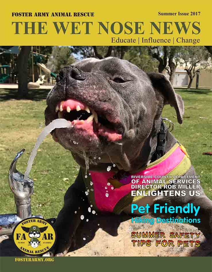 Wet Nose News Summer 2017