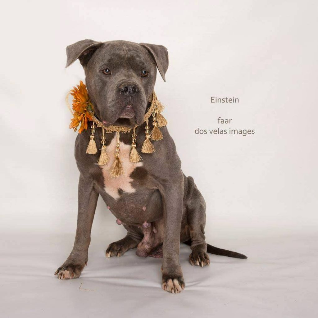 Image: Einstein available dog at Foster Army Animal Rescue
