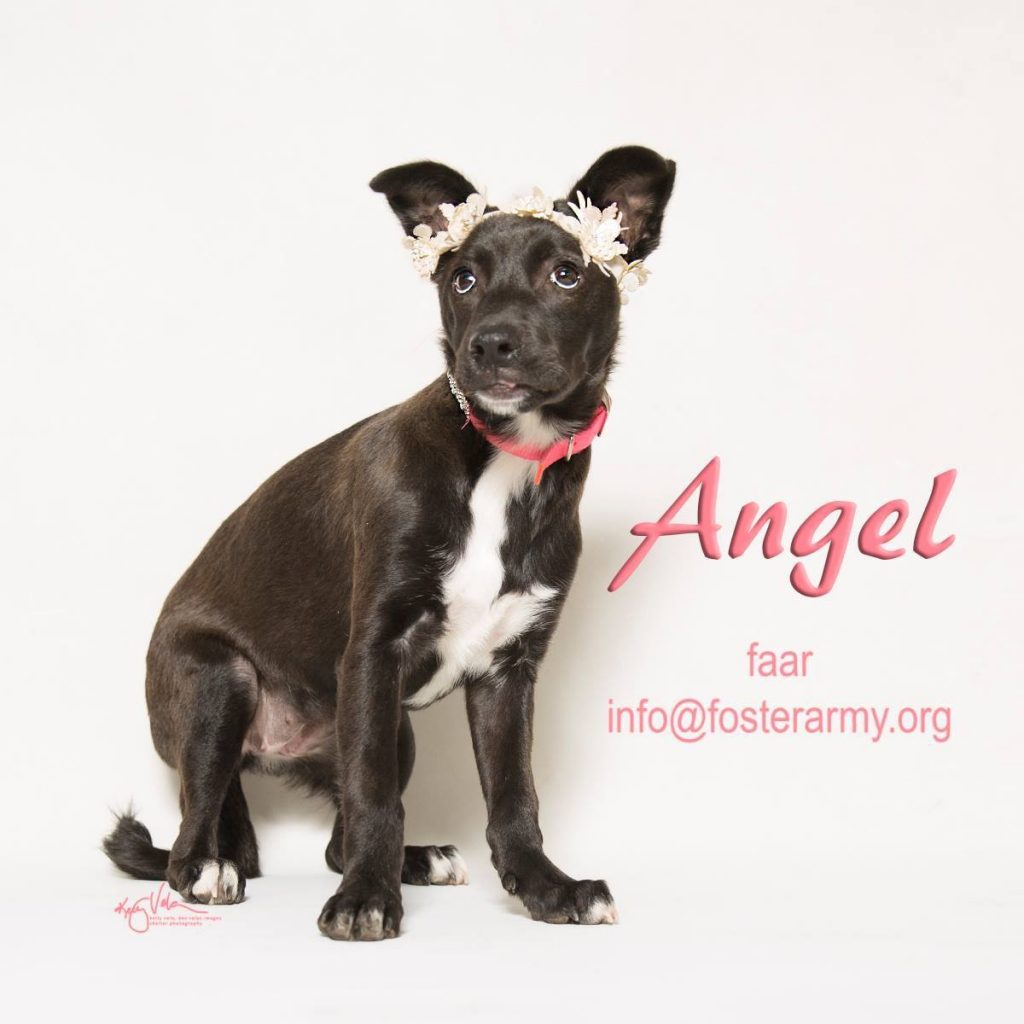 Adopt Angel the sweetest dog in Riverside with Foster Army Animal Rescue