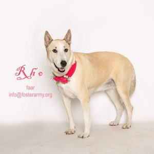 Adopt Rho and get a loving loyal dog with Foster Army Animal Rescue in Riverside, CA
