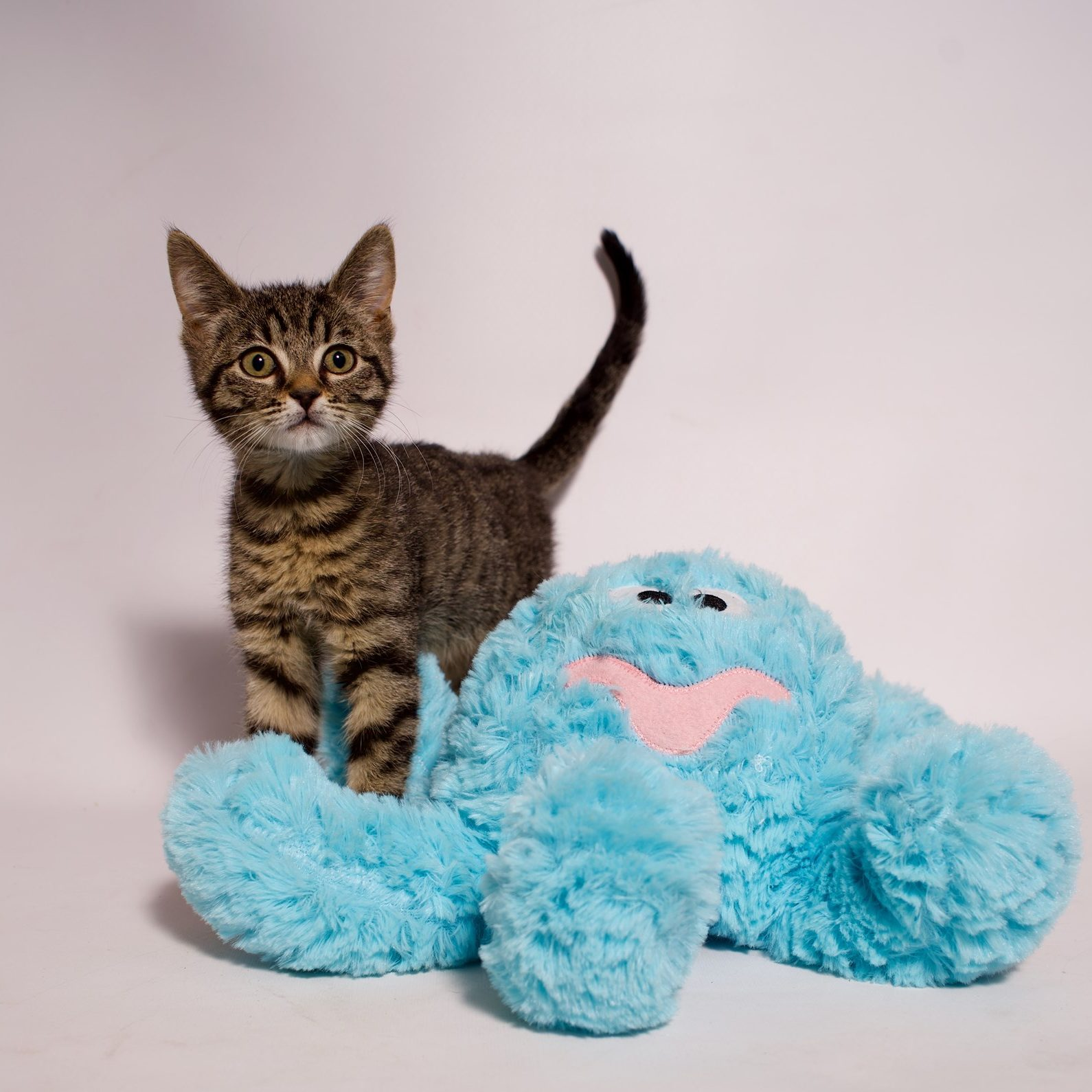 Adopt a pet in need with Foster Army Animal Rescue in Riverside, CA
