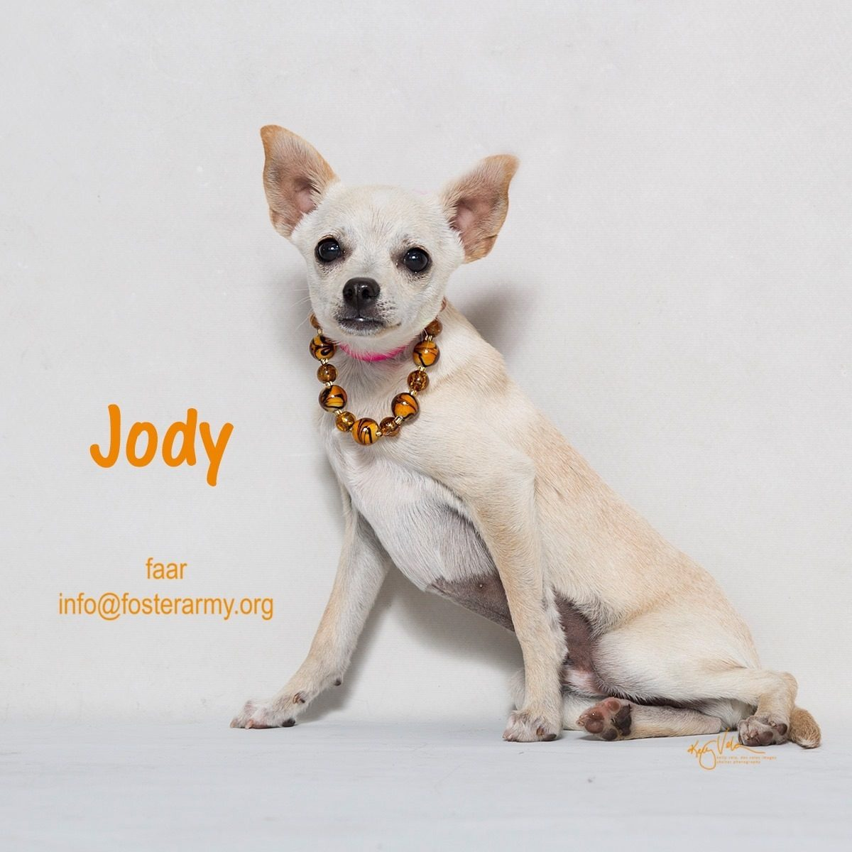 Adopt Jody and make him the man in your life. Riverside, CA with Foster Army Animal Rescue