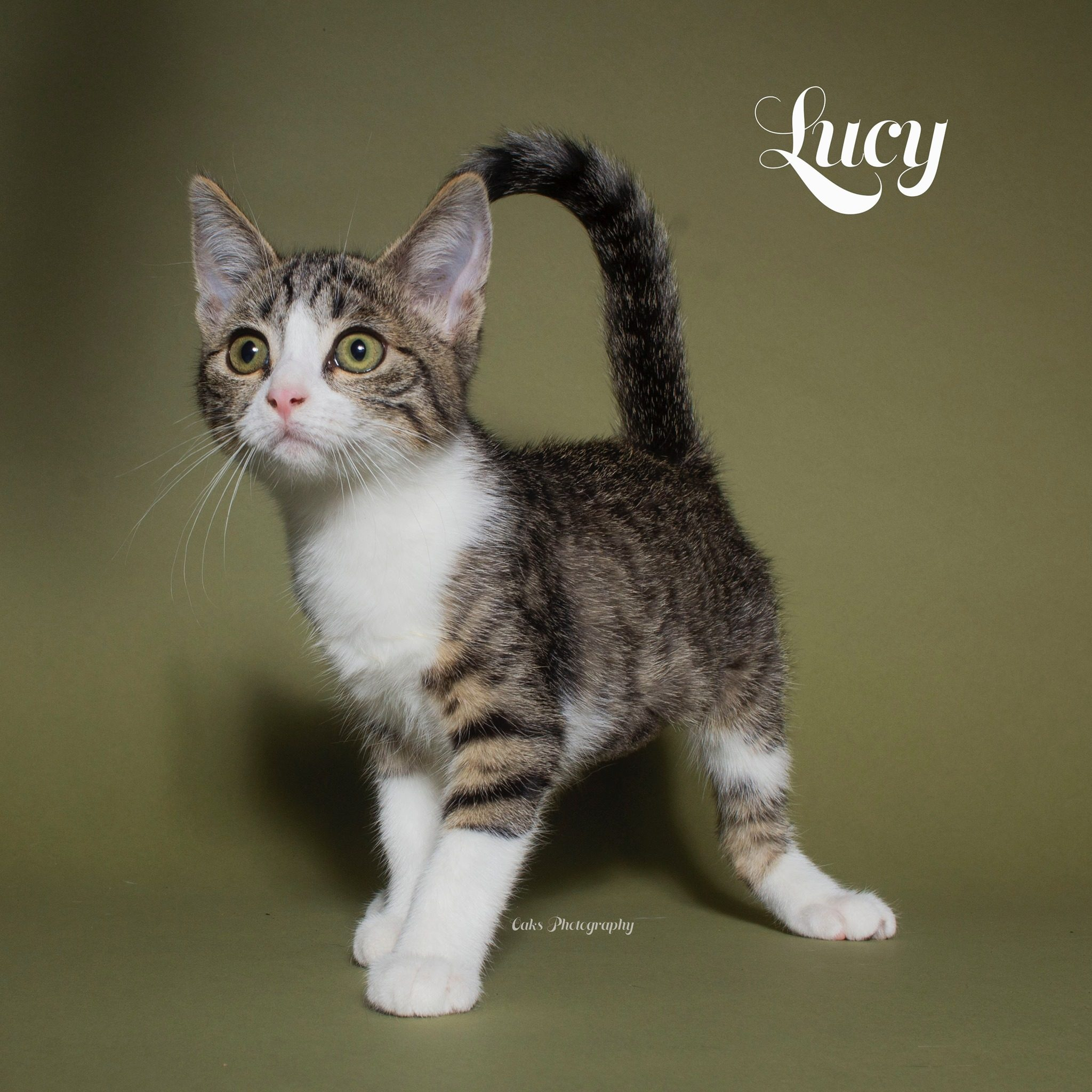 Adopt Lucy who loves to meow and cuddle with Foster Army Animal Rescue in Riverside, CA