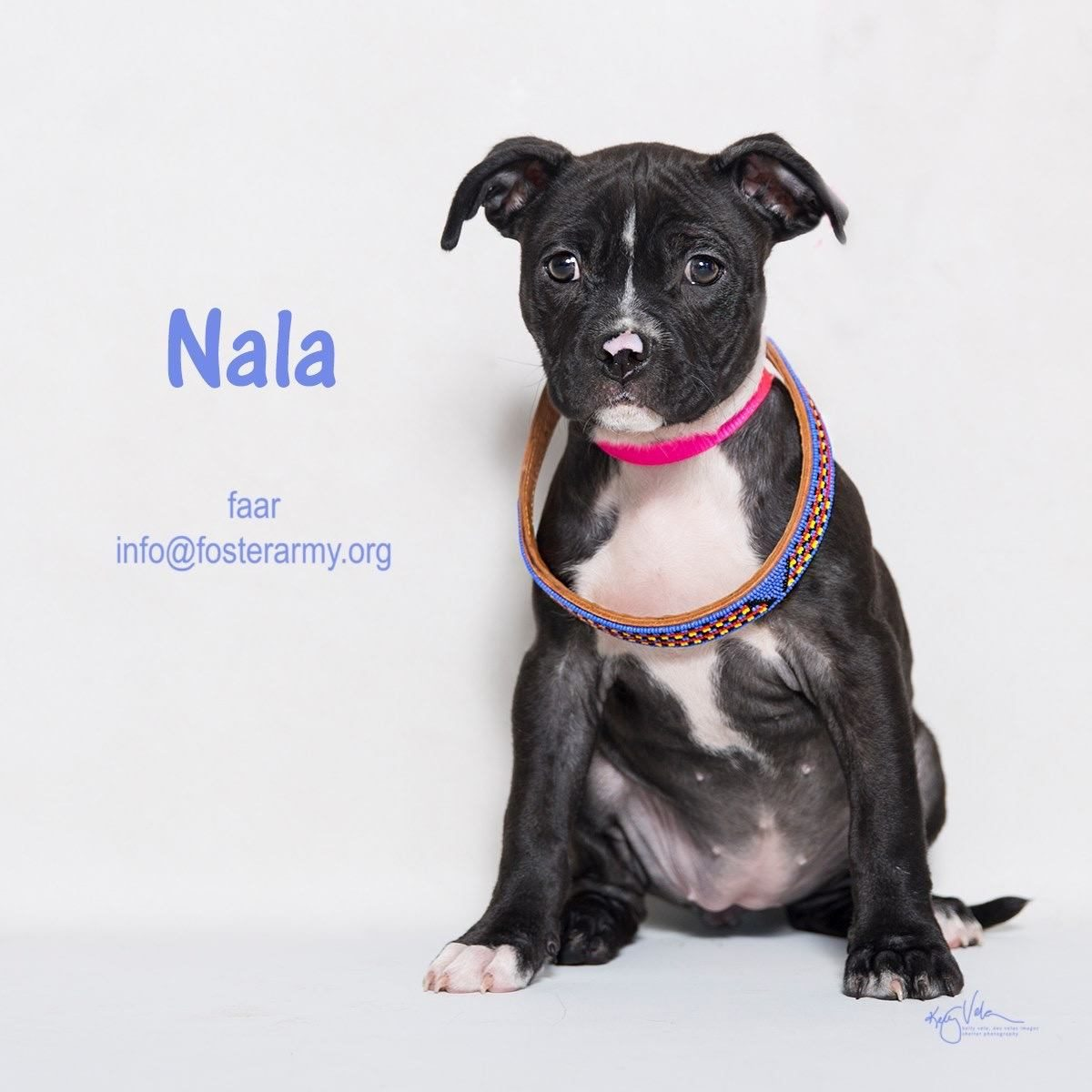 Adopt Nala and make her yours forever! Riverside, CA with Foster Army Animal Rescue
