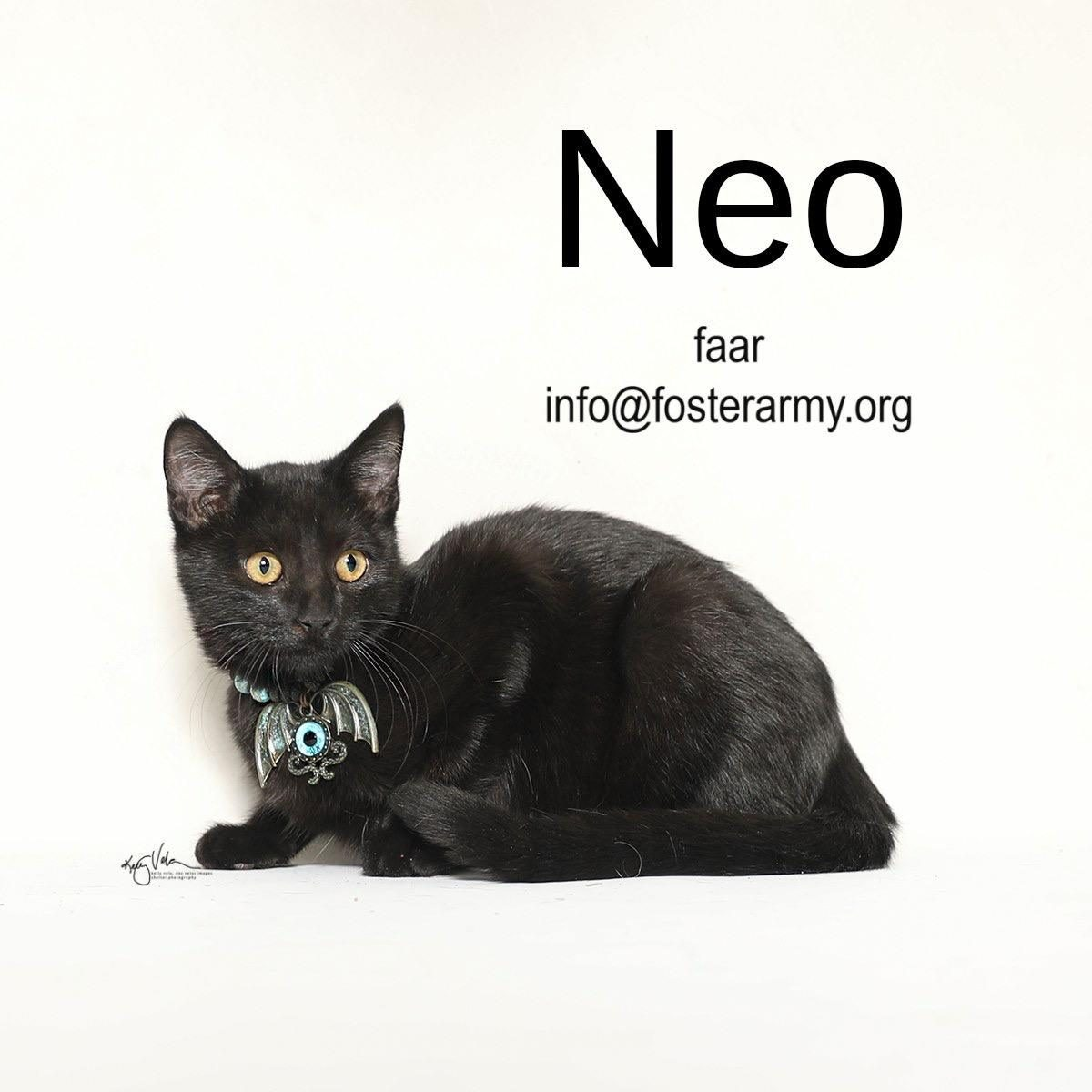 Adopt Neo the luckiest kitty with Foster Army Animal Rescue in Riverside, CA