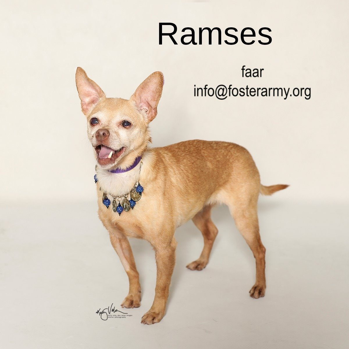 Adopt Ramses the Emperor with Foster Army Animal Rescue in Riverside, CA