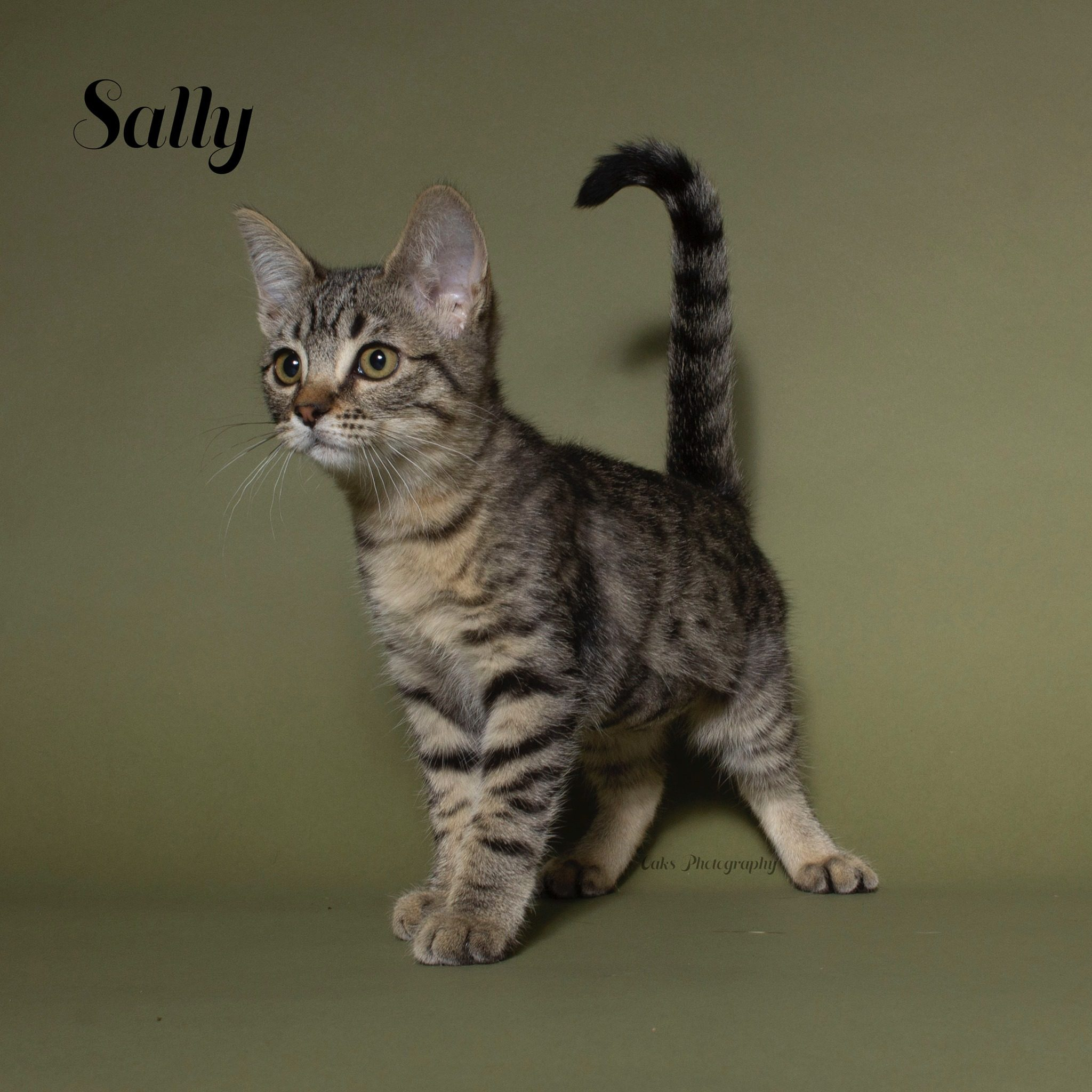 Adopt Sally the purrfect kitty with Foster Army Animal Rescue in Riverside, CA