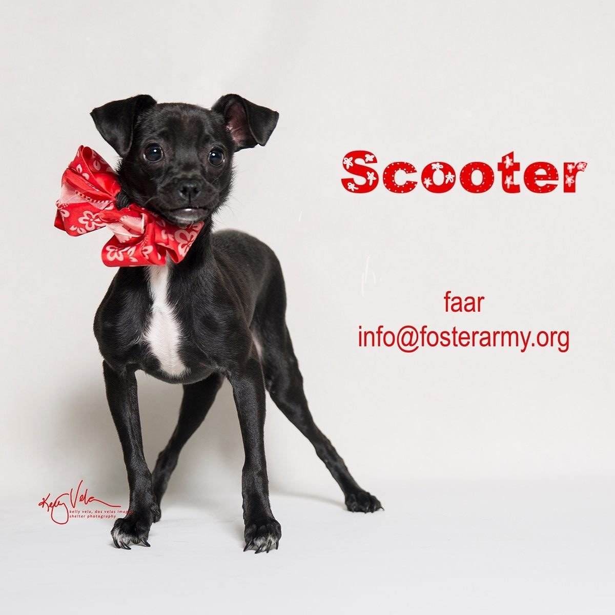 Adopt Scooter the most special dog in the world! Riverside, CA with Foster Army Animal Rescue