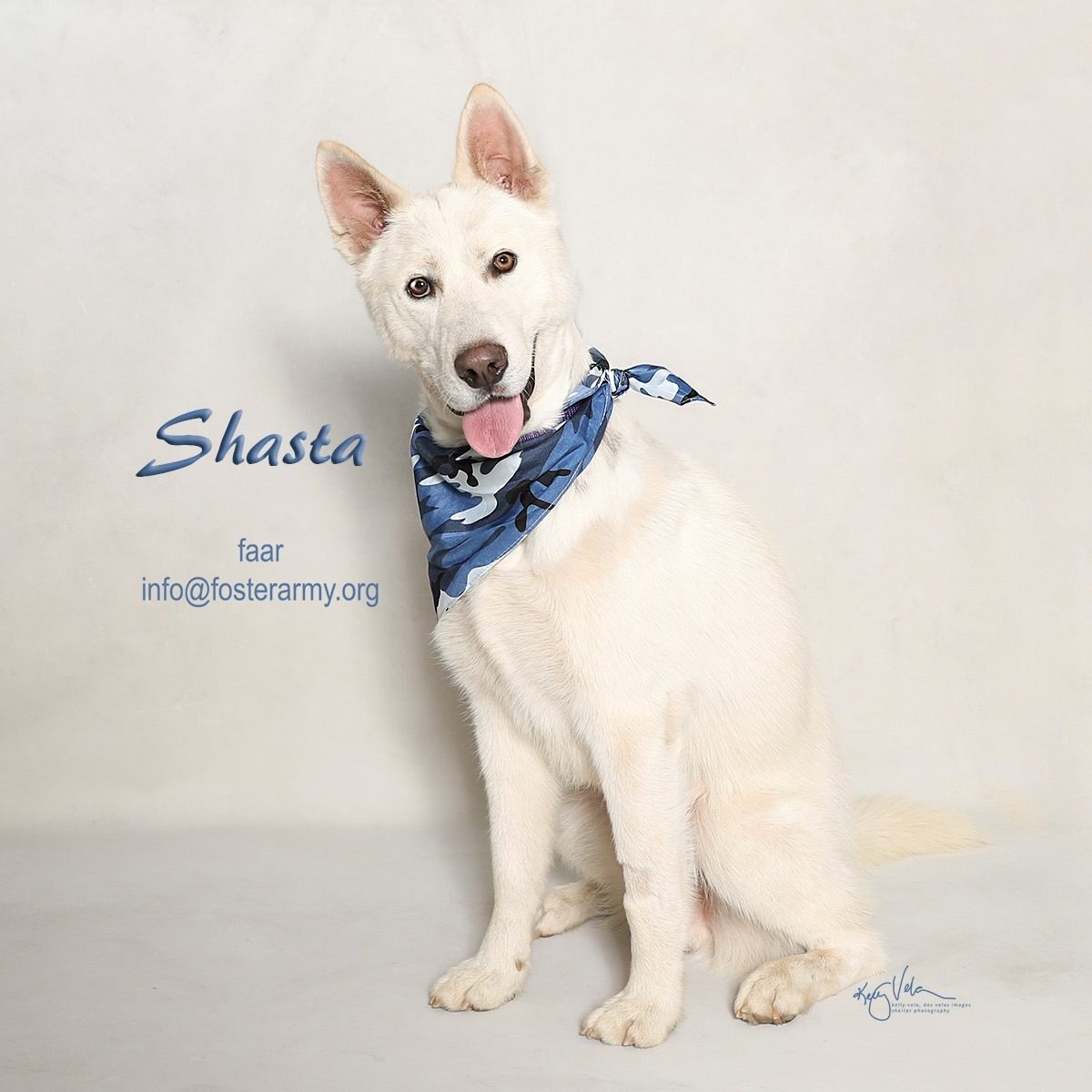 Adopt Shasta, the worlds luckiest dog with Foster Army Animal Rescue in Riverside, CA