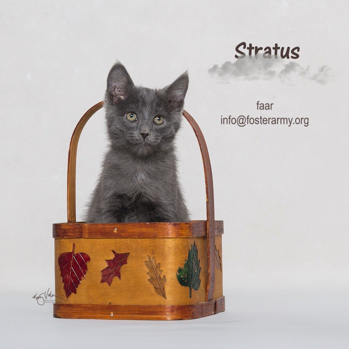 Adopt the purrfect kitty with Foster Army Animal Rescue