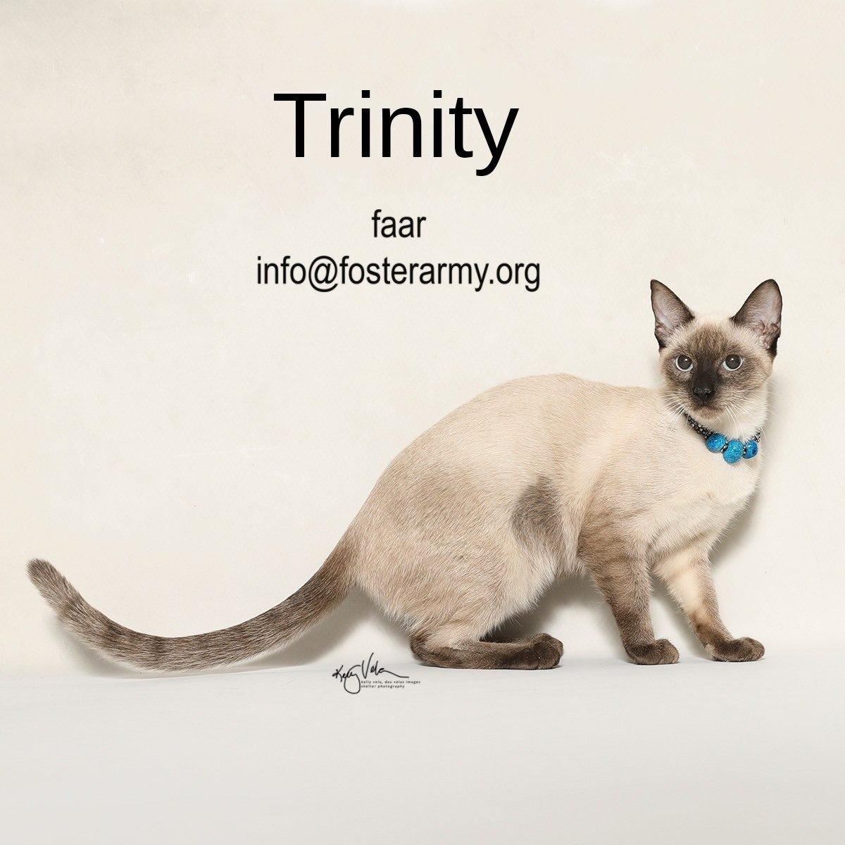 Adopt Trinity the most beautiful kitty with Foster Army Animal Rescue in Riverside, CA