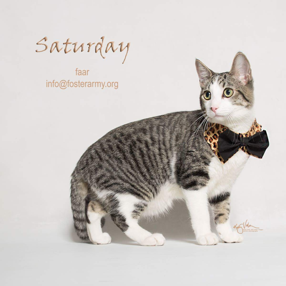 Image: Saturday available cat at Foster Army Animal Rescue